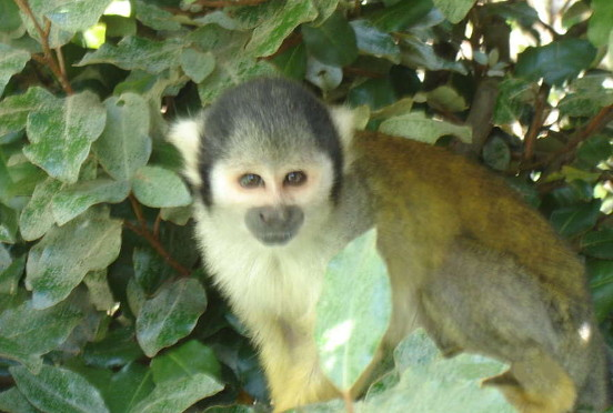 Monkey Valley is an important primate sanctuary and research centre, as well as a fun day out for everyone.